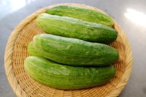 収穫があった日は自家野菜が登場。乗鞍の伝統野菜、番所きゅうり。