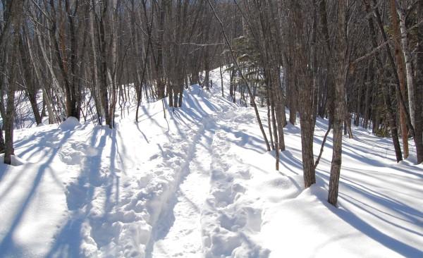 dc140116-trail
