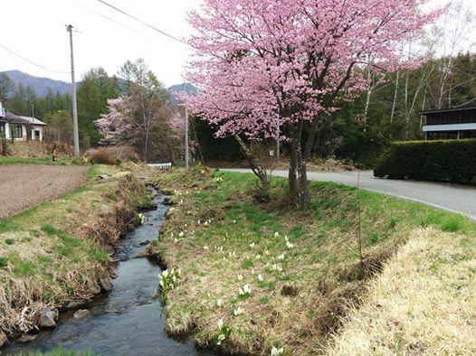 dc160427-miyanohara1.jpg