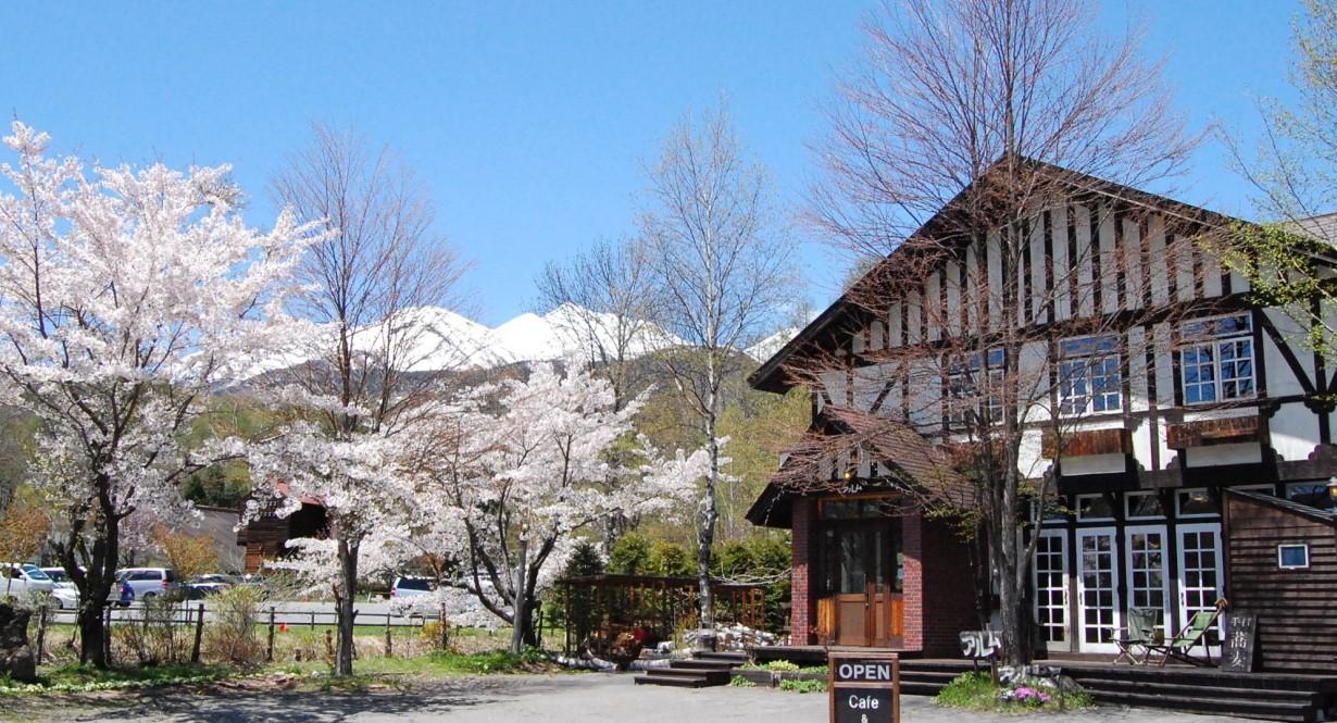 アルムの桜と残雪の乗鞍。 5月半ば。